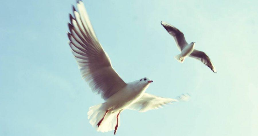 De hemelse samenkomst in Openbaring 5